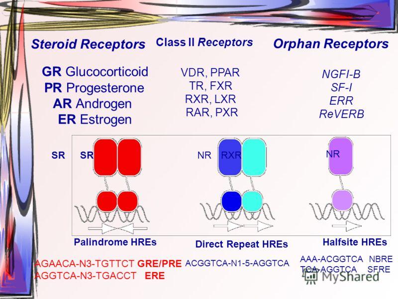 GR Glucocorticoid PR Progesterone AR Androgen ER Estrogen VDR, PPAR TR, FXR RXR, LXR RAR, PXR Steroid Receptors Class ll Receptors Orphan Receptors NGFI-B SF-I ERR ReVERB Palindrome HREsHalfsite HREs Direct Repeat HREs AGAACA-N3-TGTTCT GRE/PRE AGGTCA