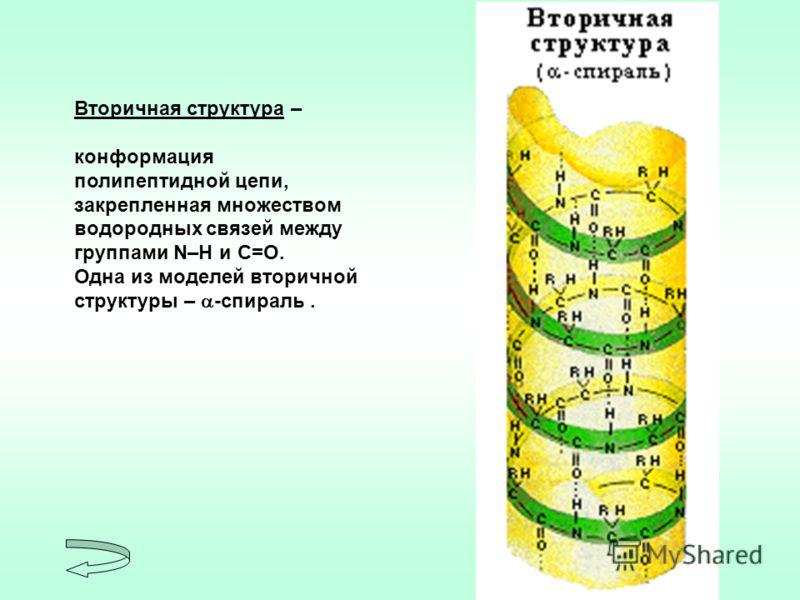 Вторичная структура – конформация полипептидной цепи, закрепленная множеством водородных связей между группами N–H и С=О. Одна из моделей вторичной структуры – -спираль.