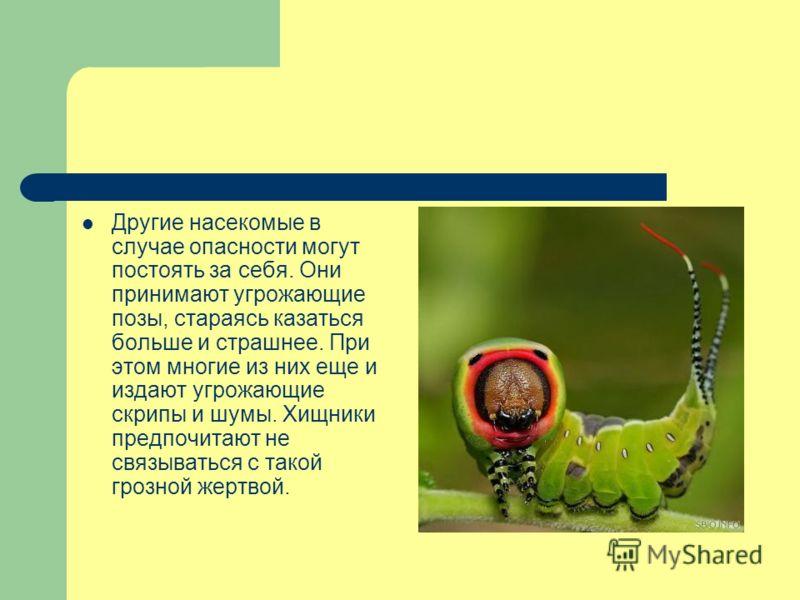 Другие насекомые в случае опасности могут постоять за себя. Они принимают угрожающие позы, стараясь казаться больше и страшнее. При этом многие из них еще и издают угрожающие скрипы и шумы. Хищники предпочитают не связываться с такой грозной жертвой.
