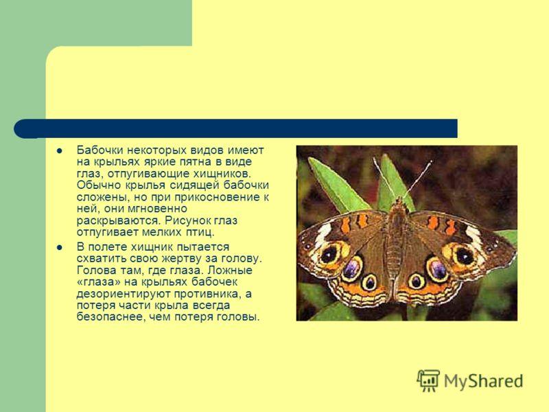 Бабочки некоторых видов имеют на крыльях яркие пятна в виде глаз, отпугивающие хищников. Обычно крылья сидящей бабочки сложены, но при прикосновение к ней, они мгновенно раскрываются. Рисунок глаз отпугивает мелких птиц. В полете хищник пытается схва