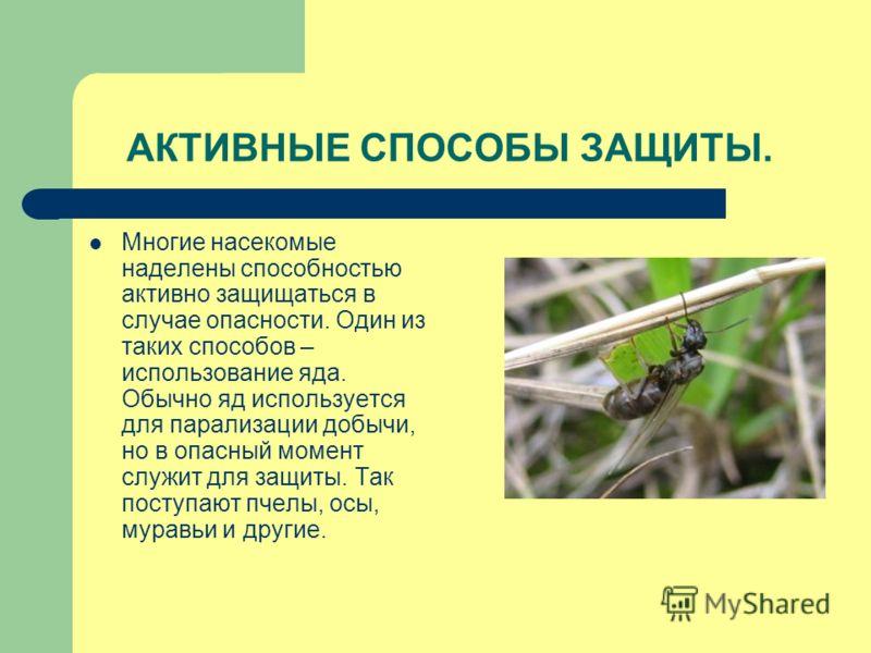 АКТИВНЫЕ СПОСОБЫ ЗАЩИТЫ. Многие насекомые наделены способностью активно защищаться в случае опасности. Один из таких способов – использование яда. Обычно яд используется для парализации добычи, но в опасный момент служит для защиты. Так поступают пче