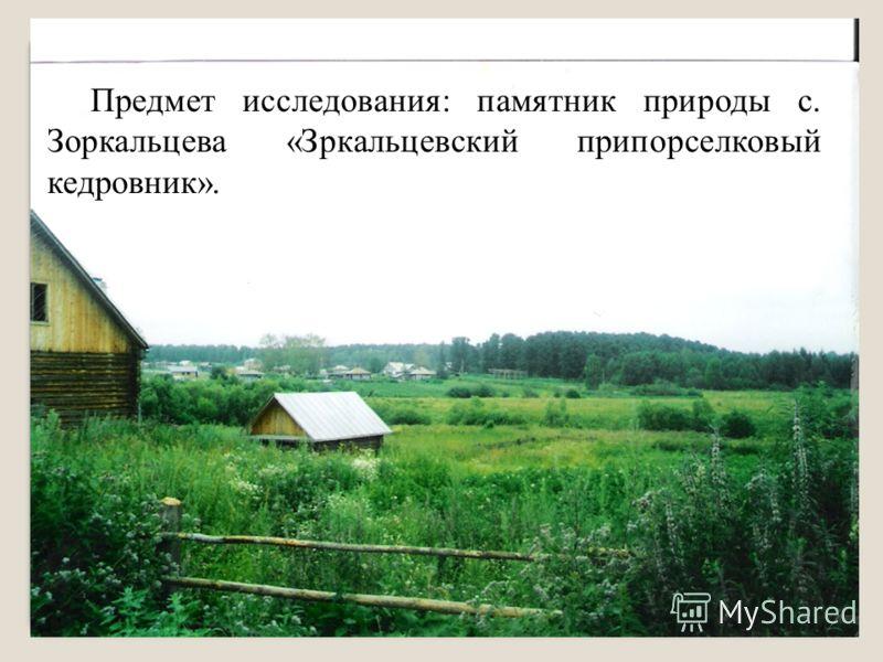 Предмет исследования: памятник природы с. Зоркальцева «Зркальцевский припорселковый кедровник».