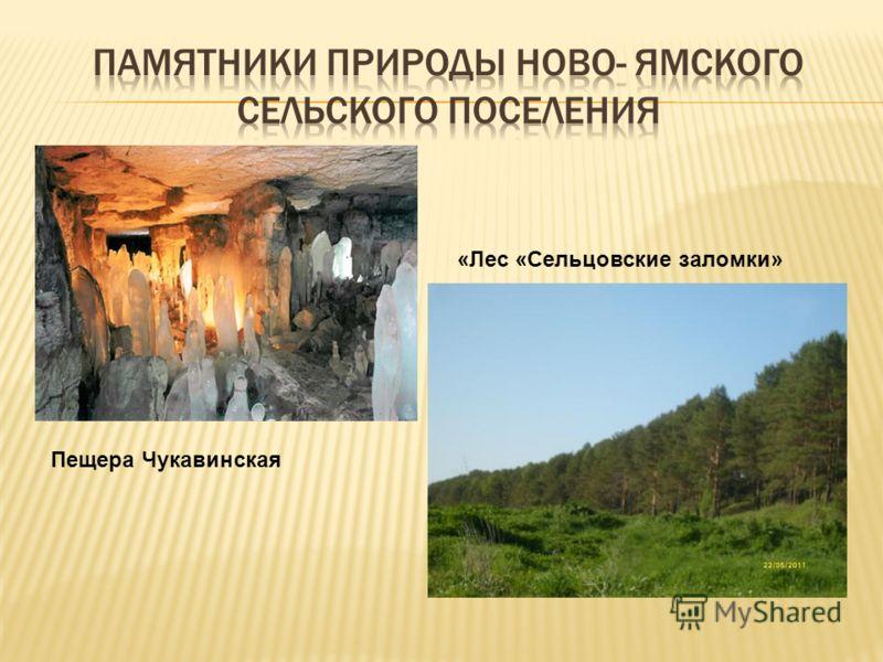 Пещера Чукавинская «Лес «Сельцовские заломки»