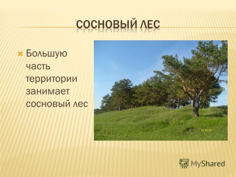 Большую часть территории занимает сосновый лес