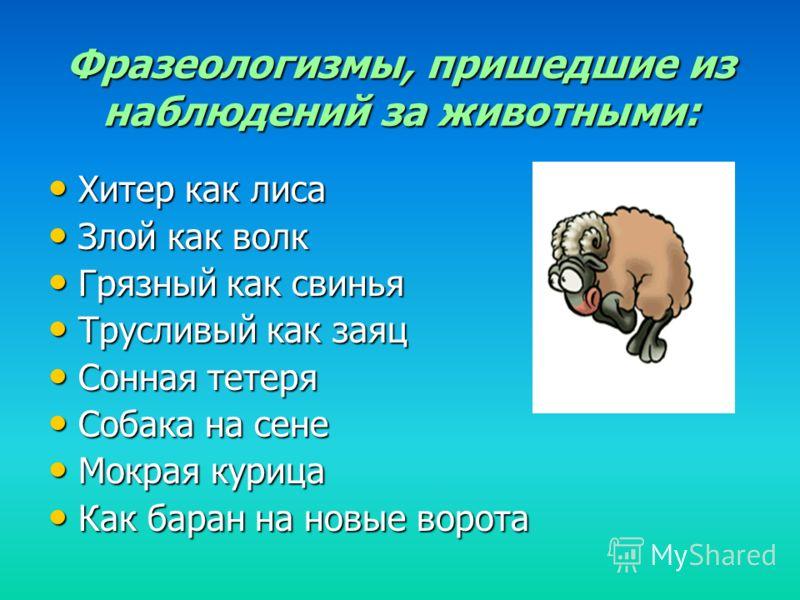 Фразеологизмы, пришедшие из наблюдений за животными: Хитер как лиса Хитер как лиса Злой как волк Злой как волк Грязный как свинья Грязный как свинья Трусливый как заяц Трусливый как заяц Сонная тетеря Сонная тетеря Собака на сене Собака на сене Мокра