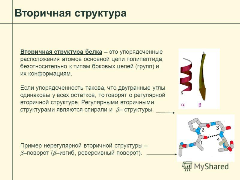 Вторичная структура Вторичная структура белка – это упорядоченные расположения атомов основной цепи полипептида, безотносительно к типам боковых цепей (групп) и их конформациям. Если упорядоченность такова, что двугранные углы одинаковы у всех остатк