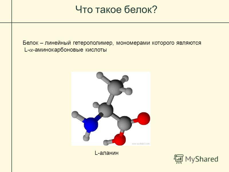 Что такое белок? Белок – линейный гетерополимер, мономерами которого являются L- -аминокарбоновые кислоты L-аланин