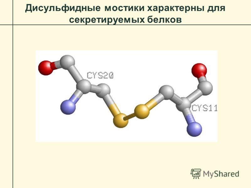Дисульфидные мостики характерны для секретируемых белков