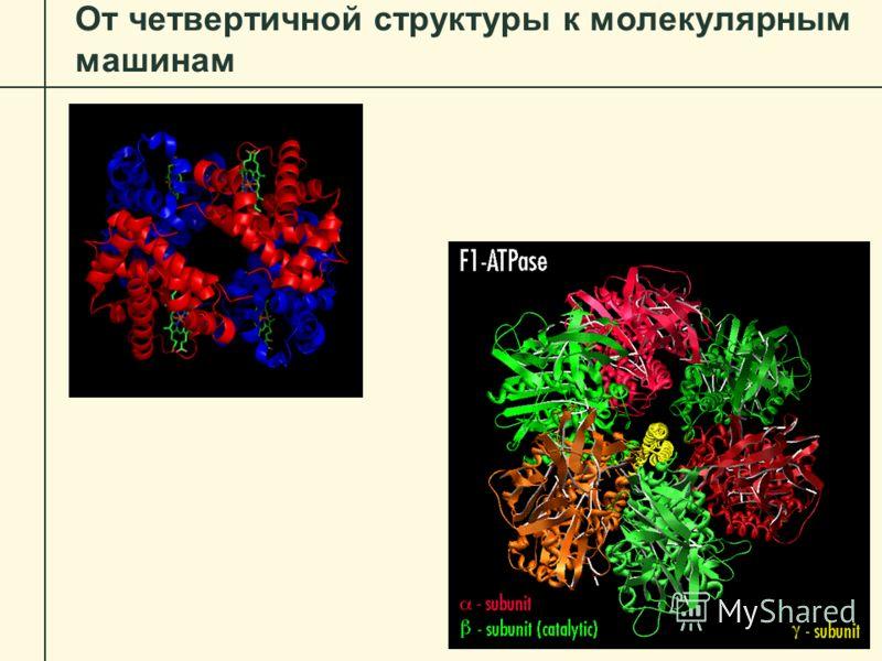 От четвертичной структуры к молекулярным машинам