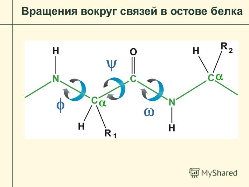 Вращения вокруг связей в остове белка