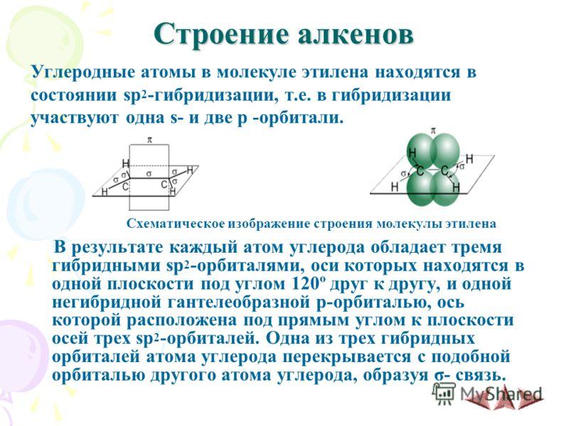 Строение алкенов Углеродные атомы в молекуле этилена находятся в состоянии sp 2 -гибридизации, т.е. в гибридизации участвуют одна s- и две p -орбитали. Схематическое изображение строения молекулы этилена В результате каждый атом углерода обладает тре