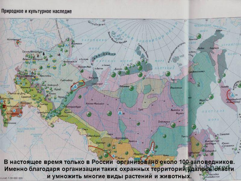 В настоящее время только в России организовано около 100 заповедников. Именно благодаря организации таких охранных территорий удалось спасти и умножить многие виды растений и животных.