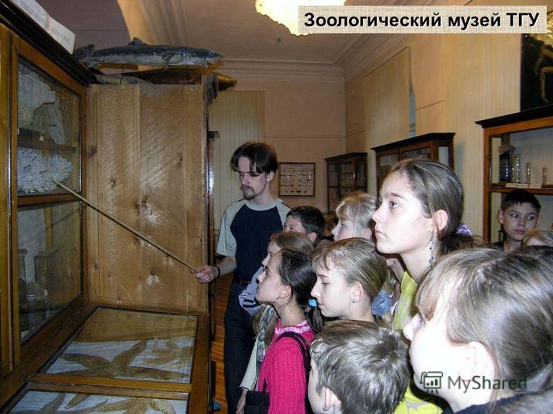 Зоологический музей ТГУ