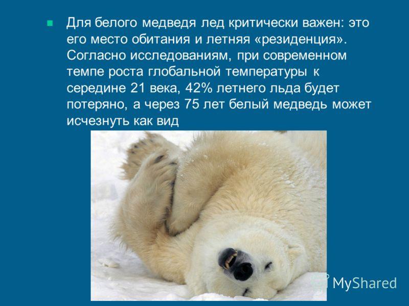 Для белого медведя лед критически важен: это его место обитания и летняя «резиденция». Согласно исследованиям, при современном темпе роста глобальной температуры к середине 21 века, 42% летнего льда будет потеряно, а через 75 лет белый медведь может