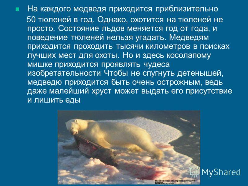 На каждого медведя приходится приблизительно 50 тюленей в год. Однако, охотится на тюленей не просто. Состояние льдов меняется год от года, и поведение тюленей нельзя угадать. Медведям приходится проходить тысячи километров в поисках лучших мест для