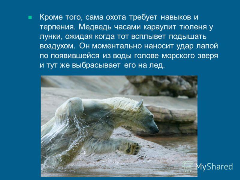 Кроме того, сама охота требует навыков и терпения. Медведь часами караулит тюленя у лунки, ожидая когда тот всплывет подышать воздухом. Он моментально наносит удар лапой по появившейся из воды голове морского зверя и тут же выбрасывает его на лед.