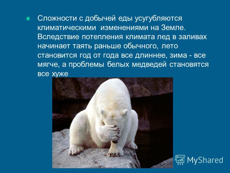 Сложности с добычей еды усугубляются климатическими изменениями на Земле. Вследствие потепления климата лед в заливах начинает таять раньше обычного, лето становится год от года все длиннее, зима - все мягче, а проблемы белых медведей становятся все