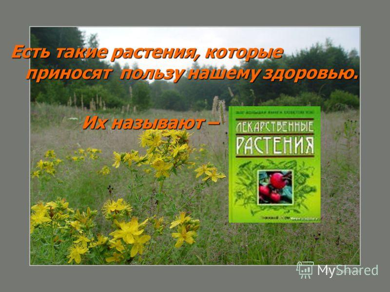 Есть такие растения, которые приносят пользу нашему здоровью. Их называют – Их называют –