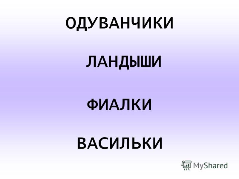 ОДУВАНЧИКИ ЛАНДЫШИ ФИАЛКИ ВАСИЛЬКИ
