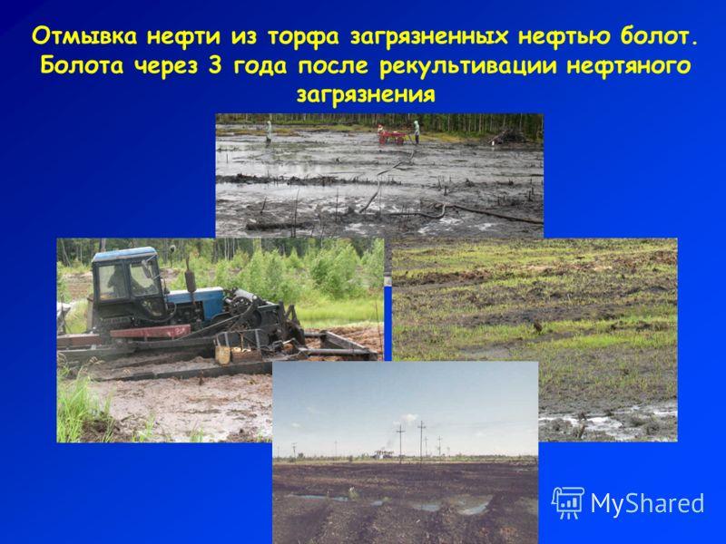 Отмывка нефти из торфа загрязненных нефтью болот. Болота через 3 года после рекультивации нефтяного загрязнения