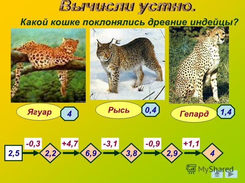 Какой кошке поклонялись древние индейцы? Гепард Ягуар Рысь 2,5 -0,3-3,1-0,9+1,1+4,7 2,26,93,82,94 4 1,4 0,4