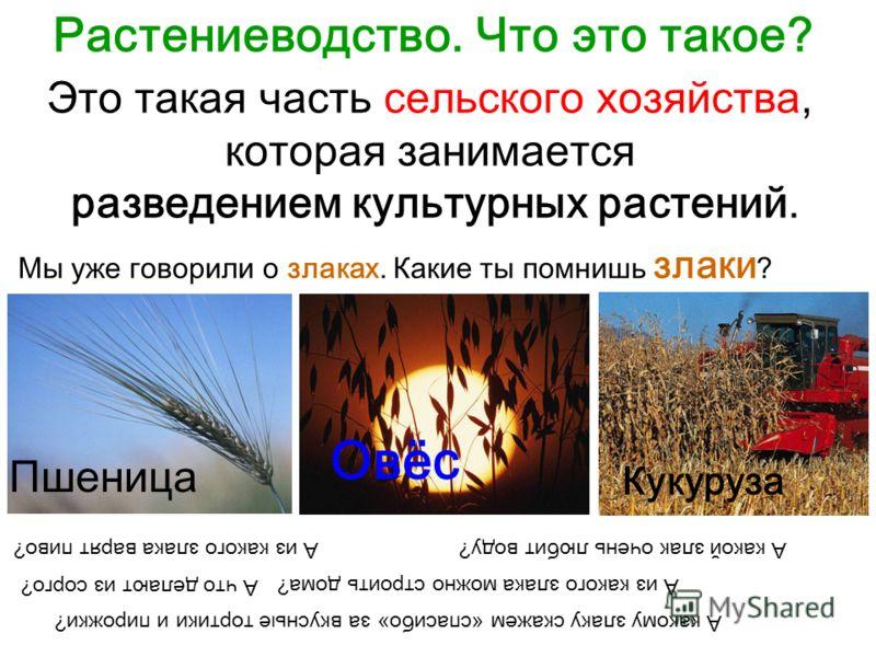 Растениеводство. Что это такое? Это такая часть сельского хозяйства, которая занимается разведением культурных растений. Мы уже говорили о злаках. Какие ты помнишь злаки ? Пшеница Овёс Кукуруза А из какого злака варят пиво?А какой злак очень любит во