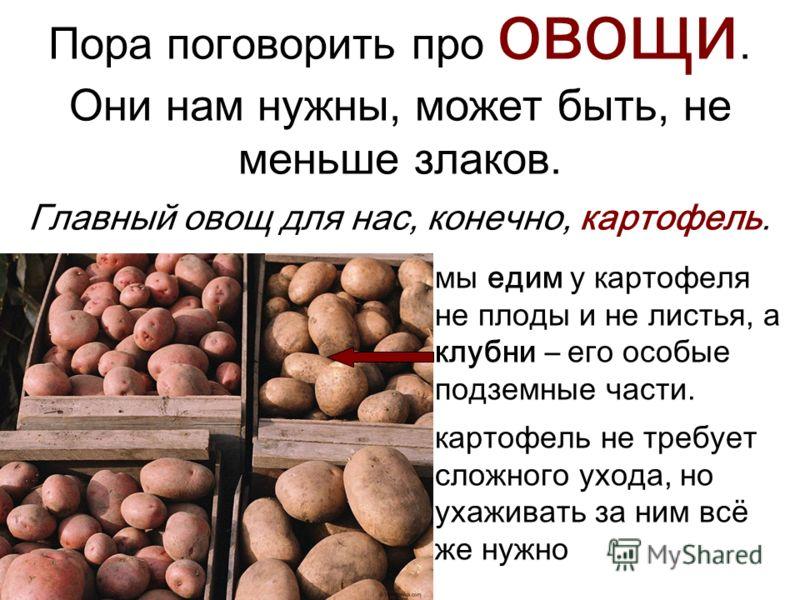 Пора поговорить про овощи. Они нам нужны, может быть, не меньше злаков. Главный овощ для нас, конечно, картофель. мы едим у картофеля не плоды и не листья, а клубни – его особые подземные части. картофель не требует сложного ухода, но ухаживать за ни