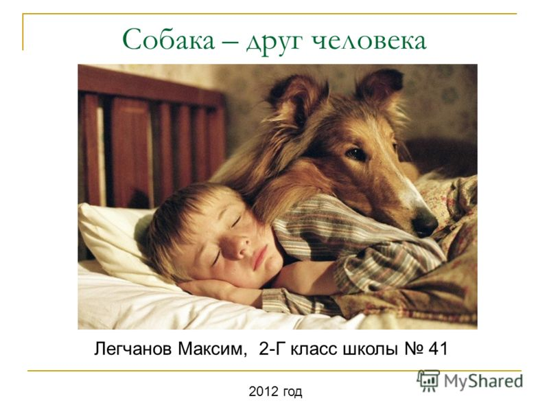 Собака – друг человека Легчанов Максим, 2-Г класс школы 41 2012 год