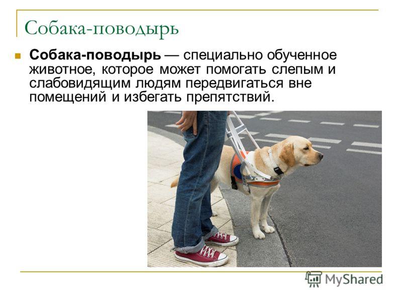 Собака-поводырь Собака-поводырь специально обученное животное, которое может помогать слепым и слабовидящим людям передвигаться вне помещений и избегать препятствий.