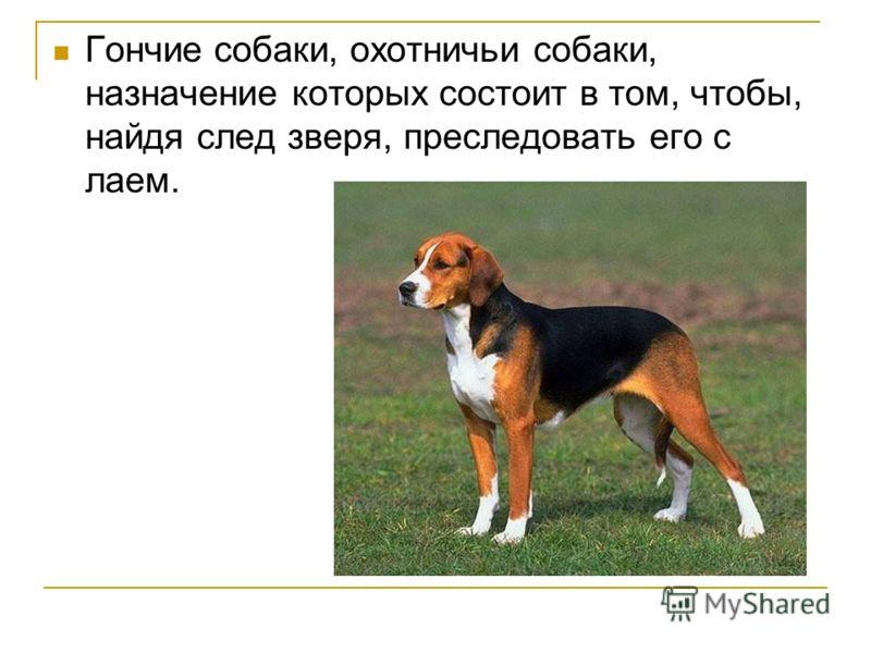 Гончие собаки, охотничьи собаки, назначение которых состоит в том, чтобы, найдя след зверя, преследовать его с лаем.