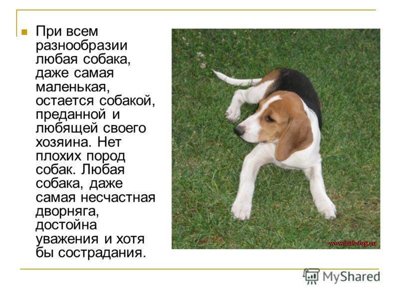 При всем разнообразии любая собака, даже самая маленькая, остается собакой, преданной и любящей своего хозяина. Нет плохих пород собак. Любая собака, даже самая несчастная дворняга, достойна уважения и хотя бы сострадания.