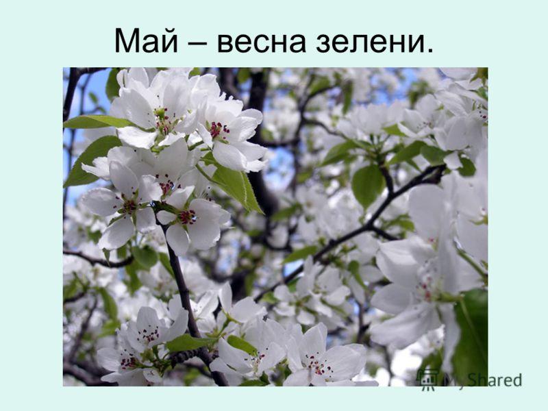 Май – весна зелени.