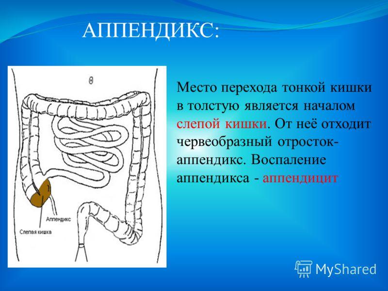 ВСАСЫВАНИЕ: Всасывание питательных веществ происходит в кишечных ворсинках, которые являются выростами кишечной стенки.