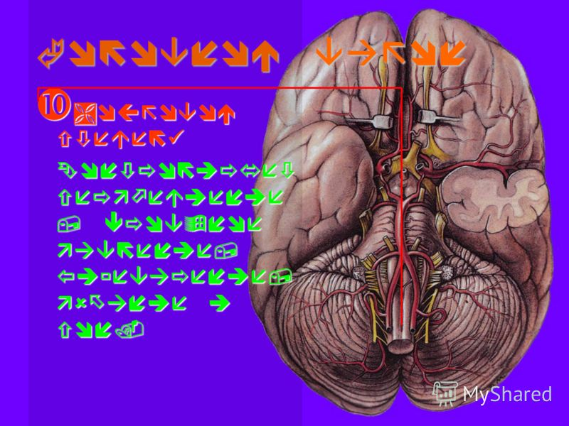 Головной вагон Мозговой стебель Мозговой стебель Контролирует сердцебиение, кровяное давление, пищеварение, дыхание и сон.