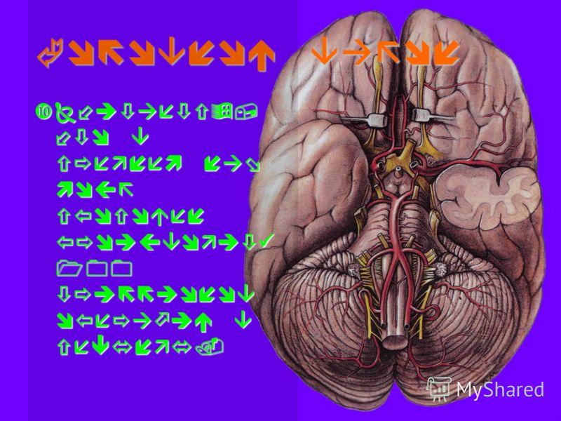 Головной вагон Считается, что в среднем наш мозг способен производить 100 триллионов операций в секунду.Считается, что в среднем наш мозг способен производить 100 триллионов операций в секунду.