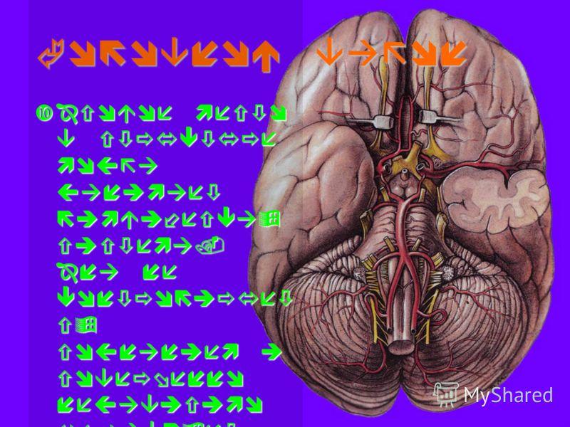 Головной вагон Особое место в структуре мозга занимает лимбическая система. Она не контролирует ся сознанием и совершенно независимо управляет разного