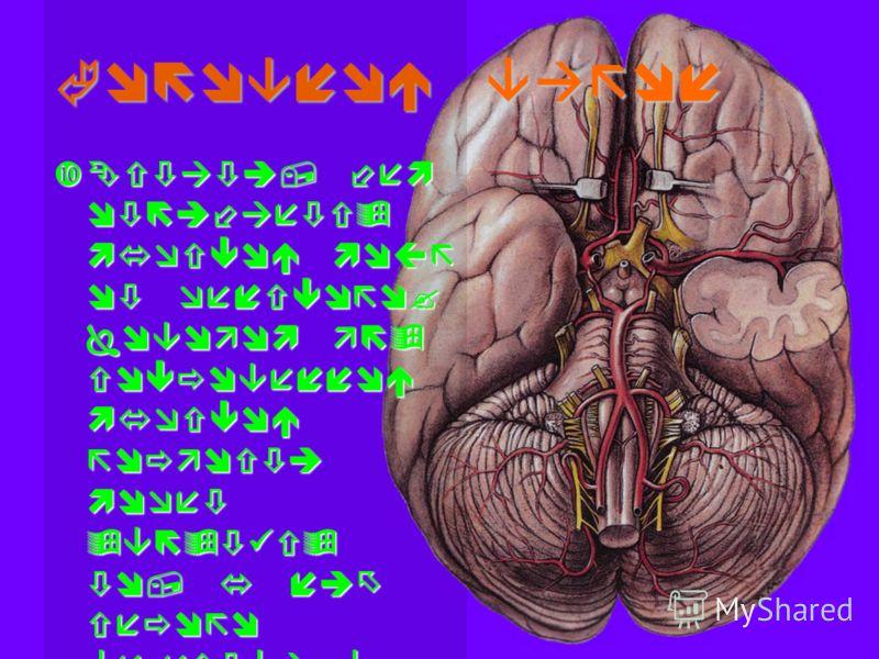 Головной вагон Кстати, чем отличается мужской мозг от женского? Поводом для сокровенной мужской гордости может являться то, у них серого вещества в среднем граммов на 100 больше, чем у женщин.Кстати, чем отличается мужской мозг от женского? Поводом д