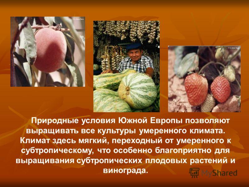 Природные условия Южной Европы позволяют выращивать все культуры умеренного климата. Климат здесь мягкий, переходный от умеренного к субтропическому, что особенно благоприятно для выращивания субтропических плодовых растений и винограда.