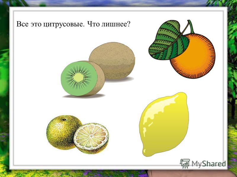 Все это цитрусовые. Что лишнее?