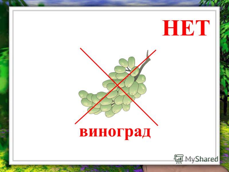 НЕТ виноград