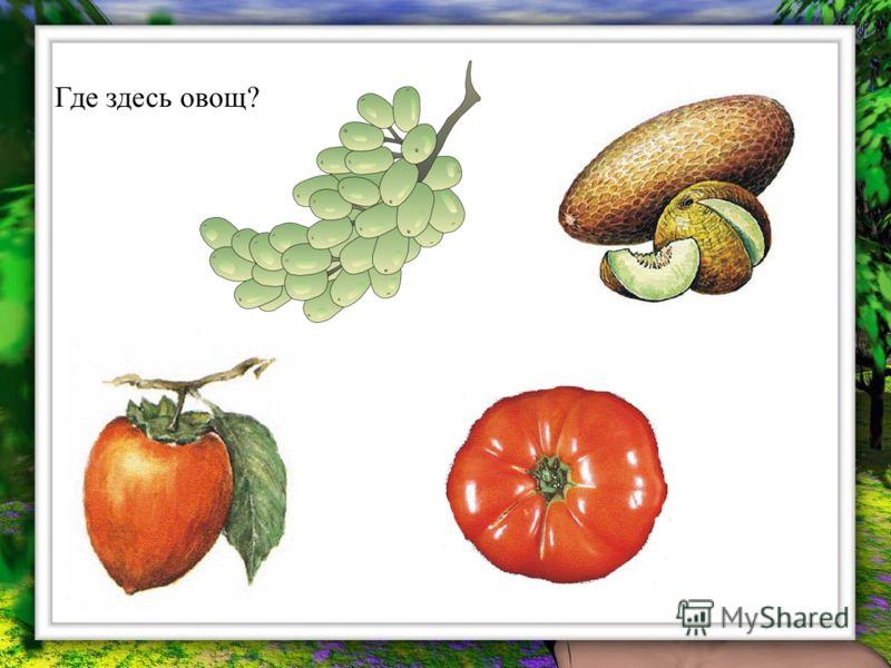 Где здесь овощ?