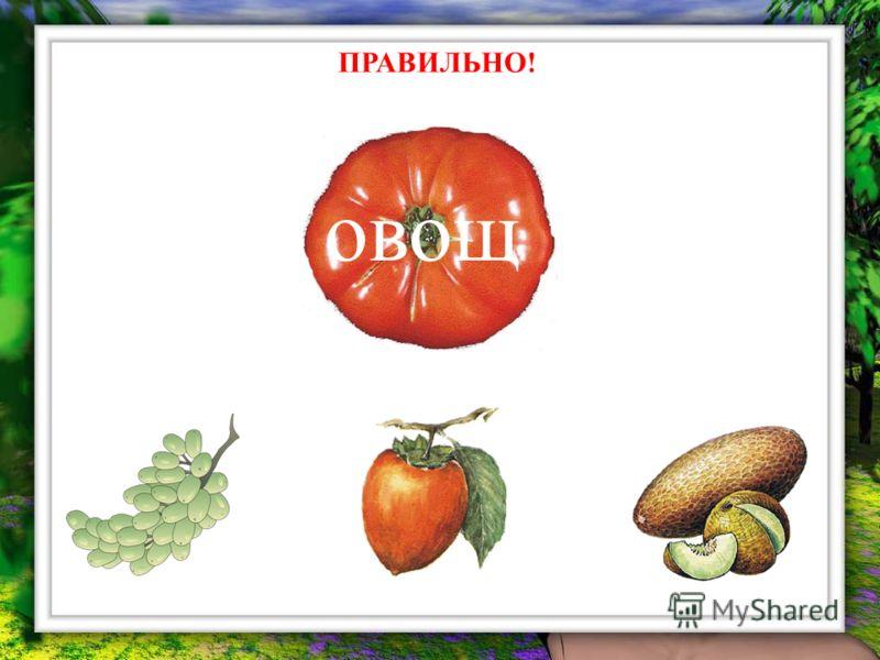 ПРАВИЛЬНО! овощ