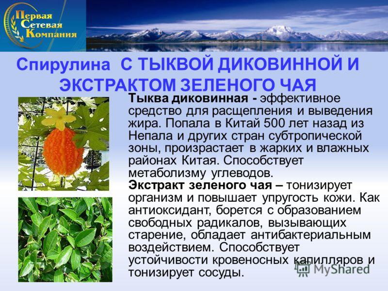 Тыква диковинная - эффективное средство для расщепления и выведения жира. Попала в Китай 500 лет назад из Непала и других стран субтропической зоны, произрастает в жарких и влажных районах Китая. Способствует метаболизму углеводов. Экстракт зеленого
