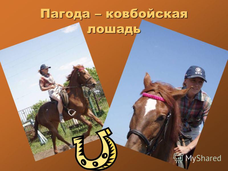 Пагода – ковбойская лошадь