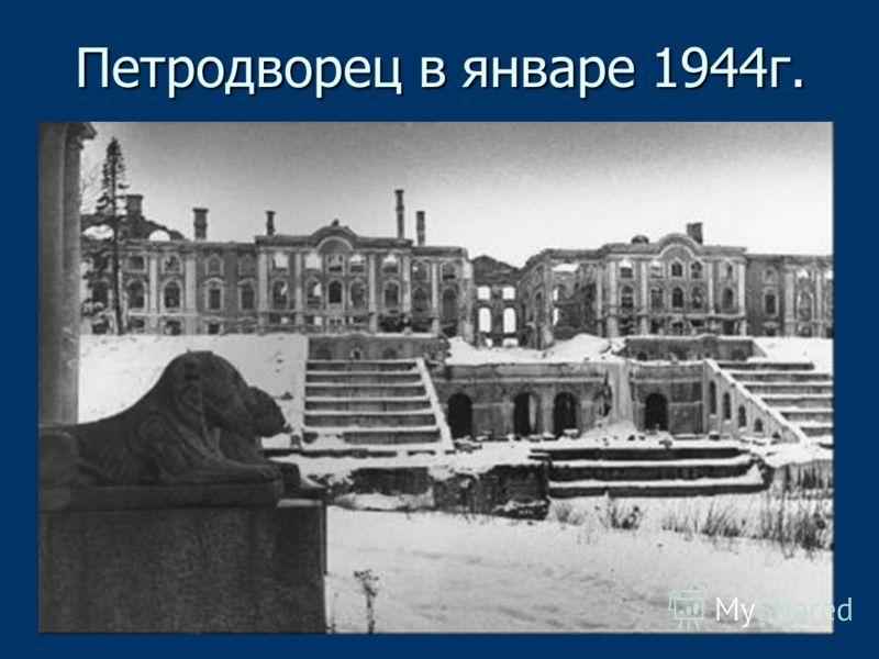 Петродворец в январе 1944г.