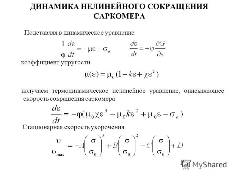 ДИНАМИКА НЕЛИНЕЙНОГО СОКРАЩЕНИЯ САРКОМЕРА Подставляя в динамическое уравнение коэффициент упругости получаем термодинамическое нелинейное уравнение, описывающее скорость сокращения саркомера Стационарная скорость укорочения.