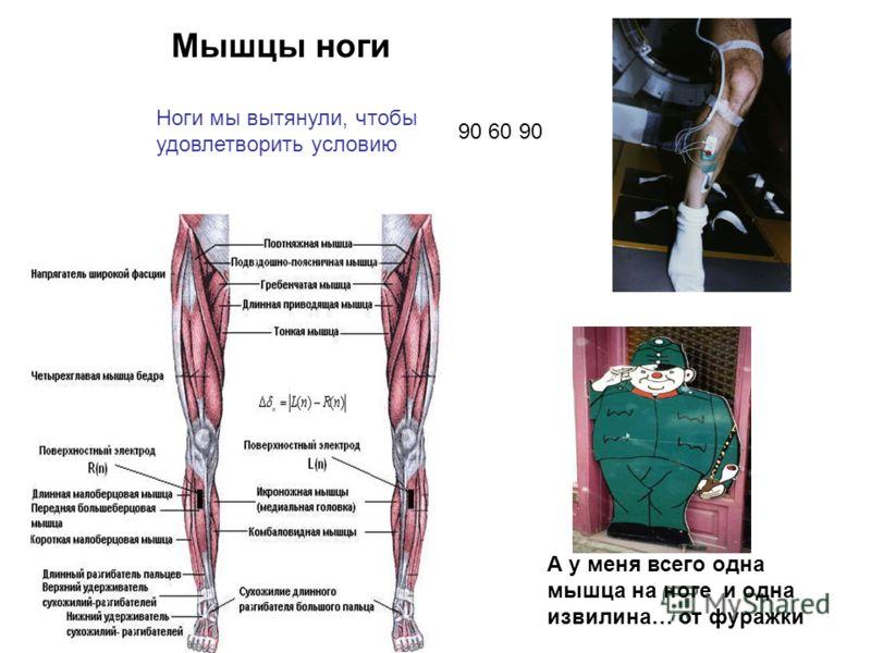 А у меня всего одна мышца на ноге и одна извилина… от фуражки Ноги мы вытянули, чтобы удовлетворить условию Мышцы ноги 90 60 90