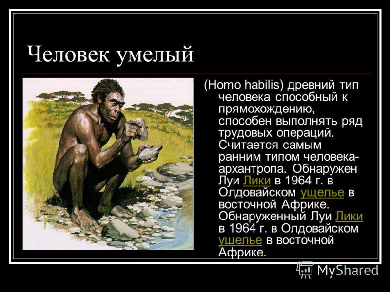 Человек умелый (Homo habilis) древний тип человека способный к прямохождению, способен выполнять ряд трудовых операций. Считается самым ранним типом человека- архантропа. Обнаружен Луи Лики в 1964 г. в Олдовайском ущелье в восточной Африке. Обнаружен