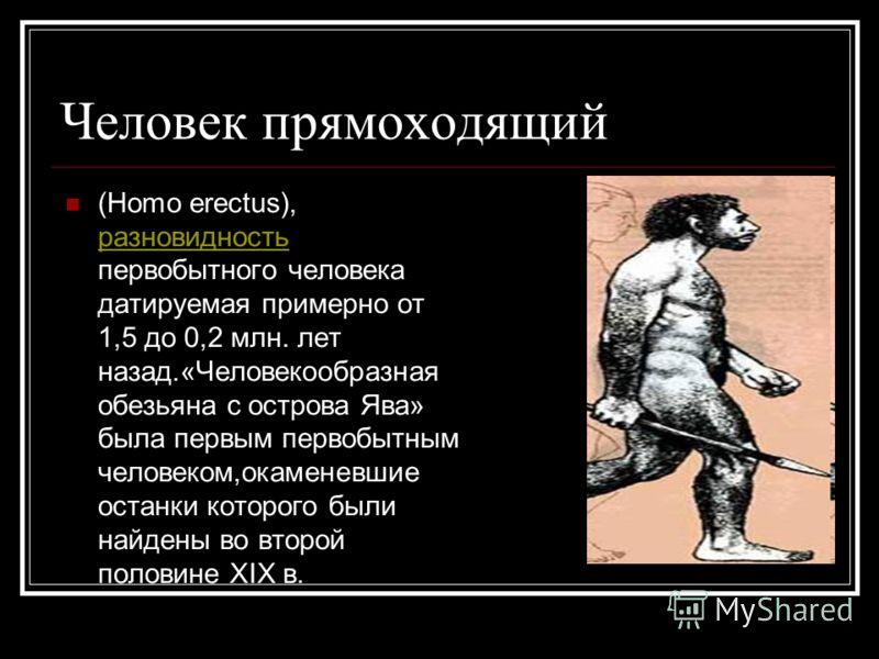 Человек прямоходящий (Homo erectus), разновидность первобытного человека датируемая примерно от 1,5 до 0,2 млн. лет назад.«Человекообразная обезьяна с острова Ява» была первым первобытным человеком,окаменевшие останки которого были найдены во второй