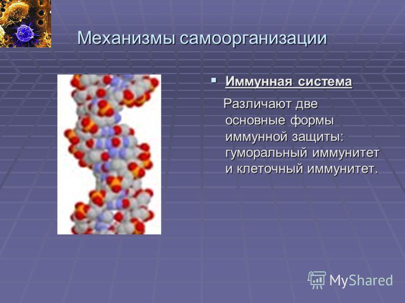 Механизмы самоорганизации Иммунная система Иммунная система Различают две основные формы иммунной защиты: гуморальный иммунитет и клеточный иммунитет. Различают две основные формы иммунной защиты: гуморальный иммунитет и клеточный иммунитет.